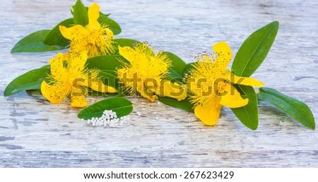 St. John's wort, a medicinal plant of 2015 - stock photo