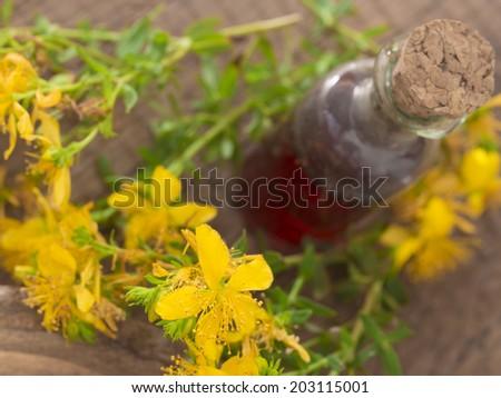 St John's wort flower, healing plant - stock photo