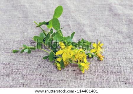 St. John's wort (Hypericum perforatum,tutsan) flowers on linen cloth - stock photo