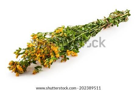 St. John's wort plants bouquet on white background - stock photo