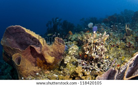 St. Lucia Reef Scene Wide Angle - stock photo