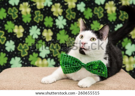 St. Patrick's Day Cat  - stock photo