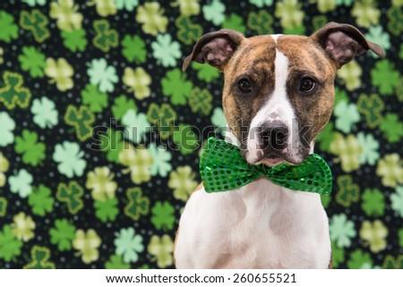 St. Patrick's Day Dog - stock photo