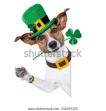 st. patrick's day dog with a clover behind a banner - stock photo