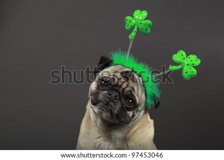 St. Patrick's Day Pug - stock photo