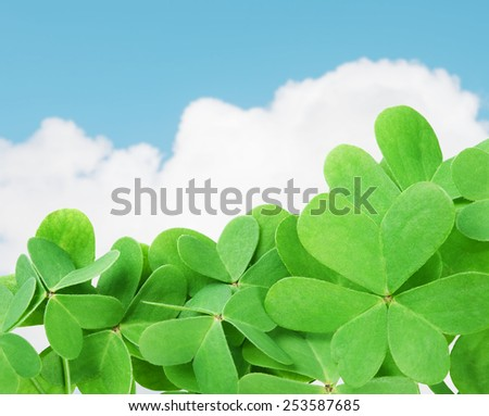 St. Patrick's green clover against cloudy sky.Selective focus - stock photo