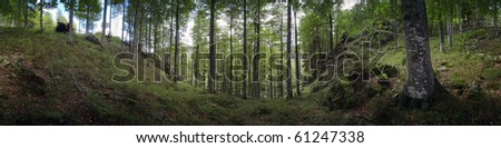 St. Wilhelms Valley, Black Forest, Germany - stock photo