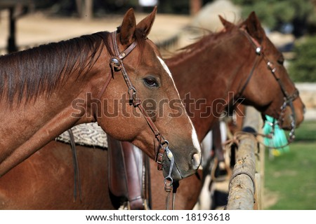 Stabled Horses - stock photo