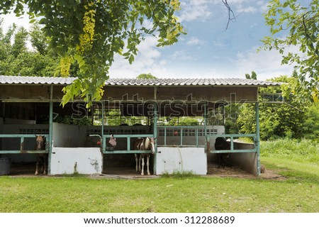 stables and horses. - stock photo