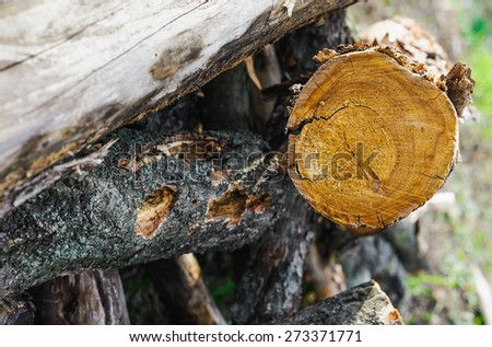 stack of firewood. close-up photo - stock photo