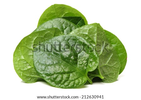 Stack of fresh malabar spinach vegetable leaves on white background - stock photo