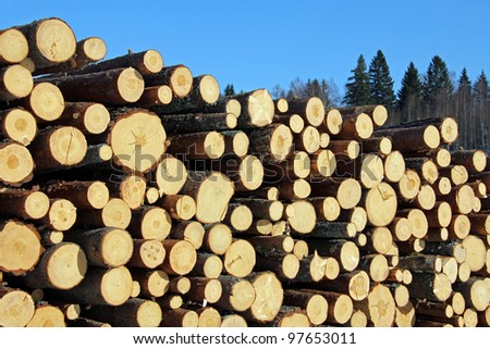 Stack of freshly cut pine logs on a clear spring day with forest background. - stock photo