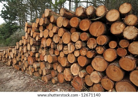 Stack of freshly cut softwood timber logs - stock photo