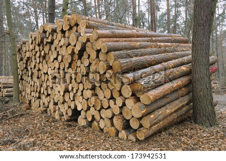 Stack of freshly cut trees in a forest. - stock photo