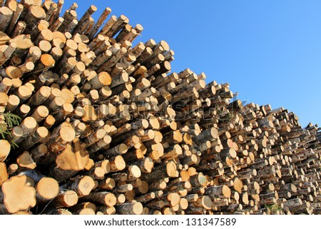 Stack of logs of different species of trees against bright blue sky. - stock photo