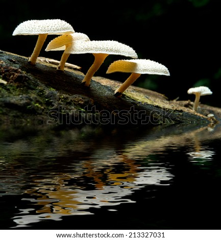 stack of mushroom with water. digital compositing with colour tone, water reflection and ripple effects. - stock photo