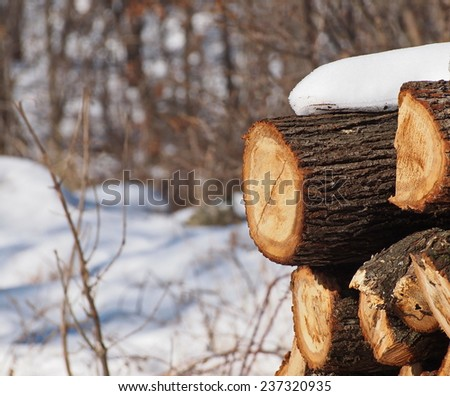 Stack of oak wood in  winter  - stock photo