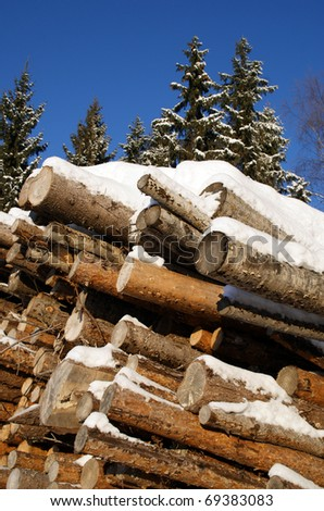 Stack of Pine and Spruce Logs in Winter Forest - stock photo