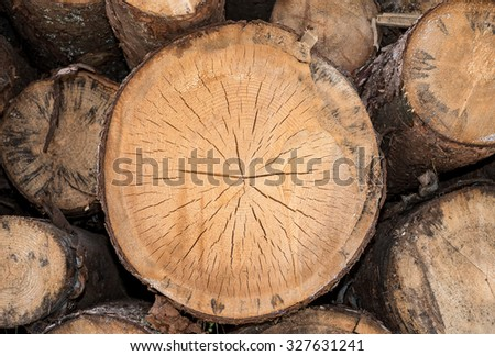 Stack of pine logs, close up, Italy - stock photo