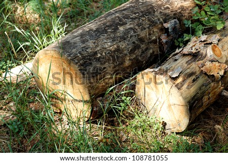 Stack of pine logs in green grass at the edge of summer forest. - stock photo