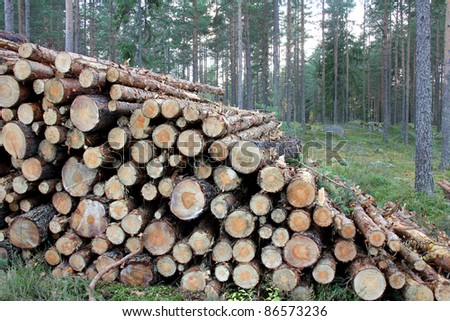 Stack of pine logs of different sizes for fuel wood or pulp in coniferous forest. - stock photo