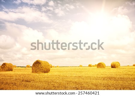Stack of straw on the field. Belarus. The wheat field in Sunny day. - stock photo