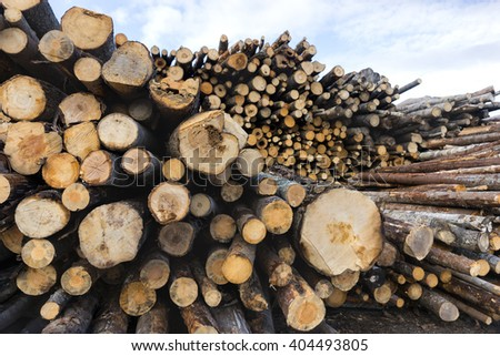 stack of tree trunks in scandinavian forest - stock photo