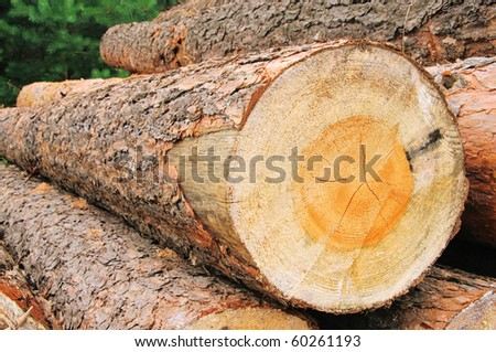 stack of wood - stock photo