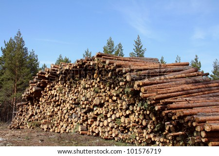 Stack of wooden logs in pine forest at spring. - stock photo