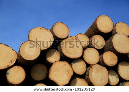 Stack of wooden logs with annual growth rings showing, with blue sky background. - stock photo