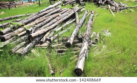 Stack of wooden pine logs in green grass - stock photo