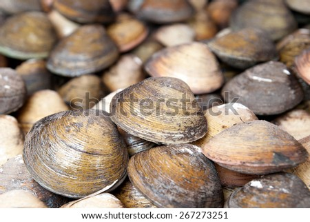 Stacked fresh raw clams. - stock photo