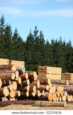 Stacked logs, cut timber and a pine forest, the whole forestry industry - stock photo