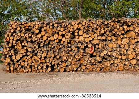 stacked logs of fire wood in the forest - stock photo