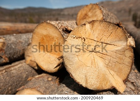 Stacked Logs of Wood - stock photo