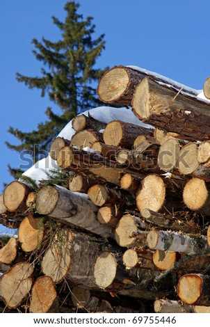 Stacked Logs with Blue Sky and Norway Spruce (Picea abies) Tree - stock photo
