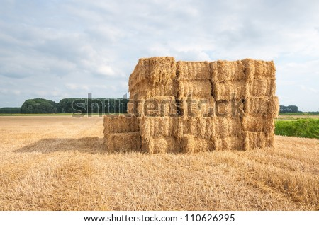 Stacked packages of straw in a stubble  field. - stock photo