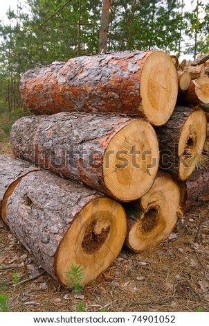 stacked pine logs in a forest - stock photo