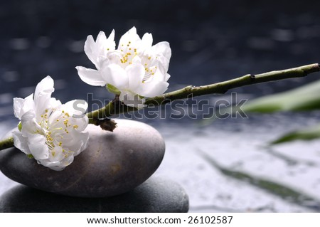 Stacked stones and white flower with petal on water drops - stock photo