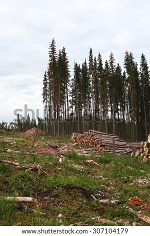 stacked timber in a forestry clearcut - stock photo