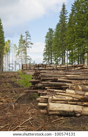 Stacked timber on clearcutting area - stock photo