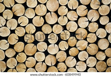 Stacked tree slices - stock photo