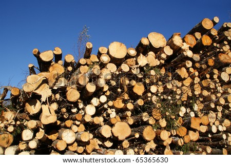 Stacked Wood Logs for Renewable Energy - stock photo