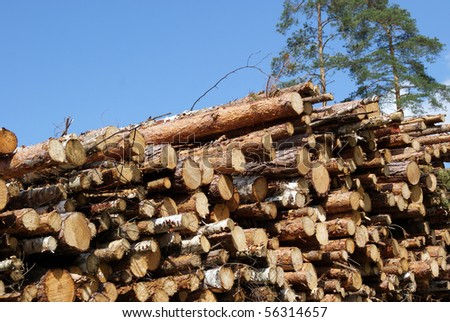 Stacked Wood Logs With Pine Trees - stock photo