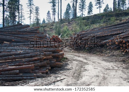 Stacks of cut logs in the forest - stock photo