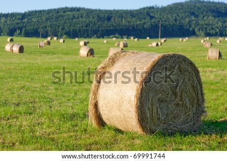 Stacks on the green field - stock photo