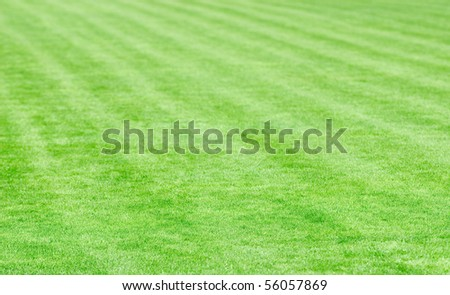 Stadium field covered with a young grass