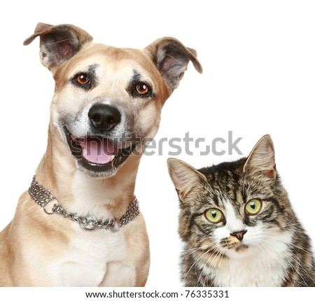 Staffordshire terrier dog and cat. Close-up portrait on a white background - stock photo