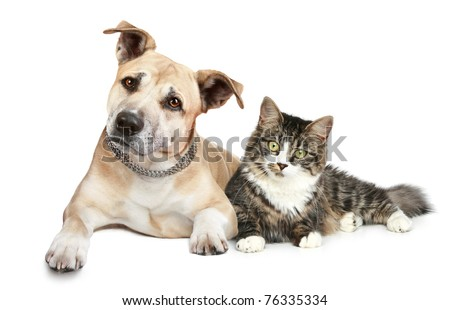 Staffordshire terrier dog and cat. Portrait on a white background - stock photo