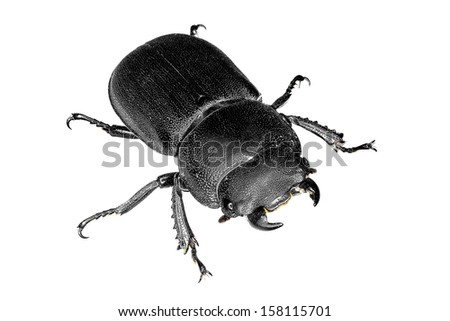 Stag beetle isolated on the white background - stock photo